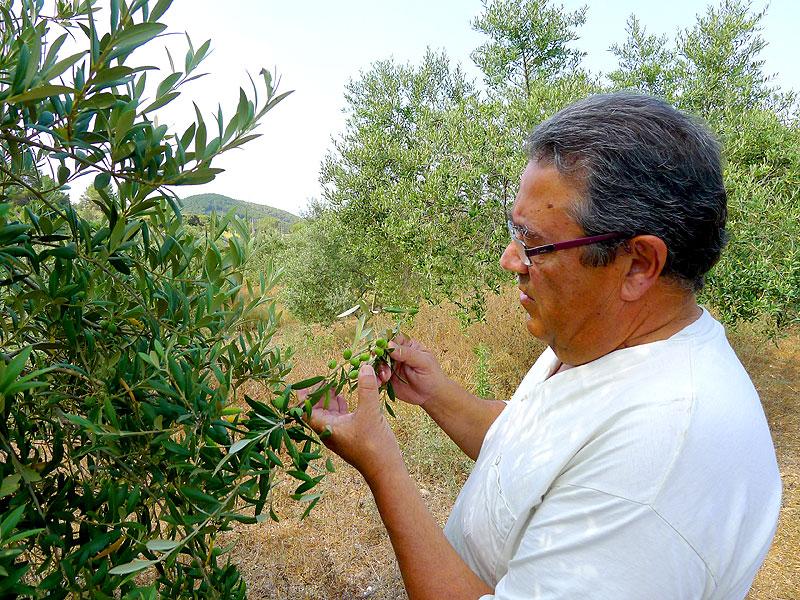 Joan Benet, en la plantación